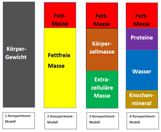 Körper-Kompartiment-Modelle